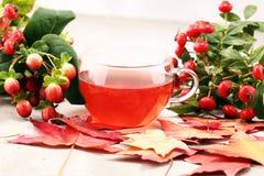 Chá copo do chá cor-de-rosa com os Rosehips do ramo do grupo, tipo do cão erval foto de stock