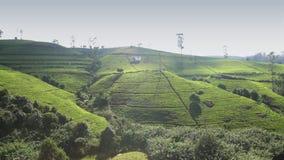 chá da colheita na plantação, em janeiro de 2016 em Nuwara Eliya, Sri Lanka vídeos de arquivo