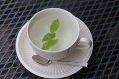 Chá da hortelã em um copo Fotos de Stock