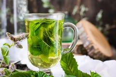 Chá da hortelã em um vidro Fotografia de Stock
