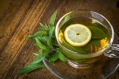 Chá da hortelã fresca Fotos de Stock Royalty Free