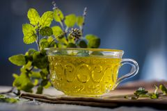 Chá da manjericão santamente, tulsi, tenuiflorum do Ocimum, em um copo transparente com as folhas benéficas para doenças cardíaca Imagem de Stock