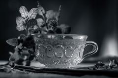 Chá da manjericão santamente, tulsi, tenuiflorum do Ocimum, em um copo transparente com as folhas benéficas para doenças cardíaca Fotos de Stock