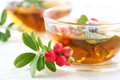 Chá da vitalidade Foto de Stock