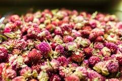Chá das rosas vermelhas Imagens de Stock Royalty Free