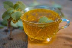 Chá de Ajwain, ammi de Trachyspermum Imagens de Stock