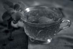 Chá de Ajwain, ammi de Trachyspermum Imagem de Stock