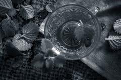 Chá de Ajwain, ammi de Trachyspermum Fotos de Stock Royalty Free