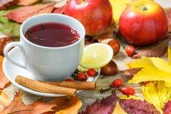 Chá de aquecimento do outono Imagens de Stock Royalty Free