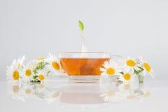 Chá de camomila Imagens de Stock