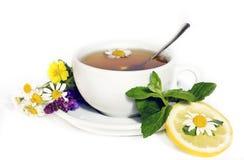 Chá de camomila erval Fotografia de Stock Royalty Free