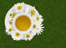 Chá de camomila erval Fotos de Stock