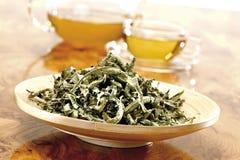 Chá de erva santamente (officinalis do Verbena) imagens de stock royalty free