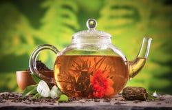 Chá de florescência Fotografia de Stock Royalty Free