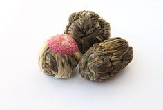Chá de florescência (chá de florescência) Fotos de Stock Royalty Free