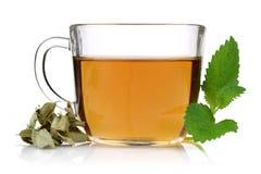 Chá de Melissa em um copo de vidro com erva-cidreira imagem de stock royalty free