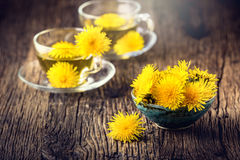 Chá do dente-de-leão Flores do dente-de-leão e copos de chá amarelos Imagem de Stock