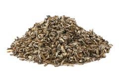 Chá do jasmim Imagem de Stock Royalty Free