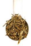 Chá do jasmim Imagens de Stock Royalty Free
