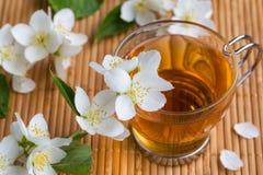 Chá do jasmim com jasmim Imagem de Stock