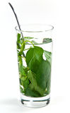 Chá do Peppermint Imagem de Stock Royalty Free
