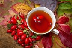 Chá do Rosehip Fotografia de Stock Royalty Free