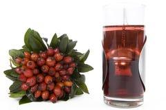 Chá dos Rosehips Foto de Stock