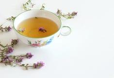 Chá e folhas dos pulegioides do Thymus O chá é eficaz durante doenças das vias respiratórias superiores Erva medicinal E imagem de stock
