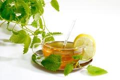Chá erval com as folhas do bálsamo de limão Foto de Stock Royalty Free