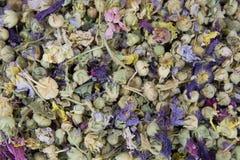 Chá erval do inverno imagem de stock