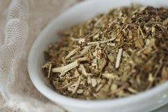 Chá fraco da passiflora (Passiflora) Foto de Stock Royalty Free