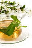Chá herbáceo imagens de stock royalty free