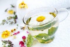 chá médico da Camomila-hortelã Imagens de Stock