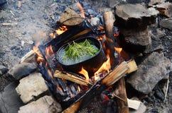 Chá nas madeiras Imagem de Stock