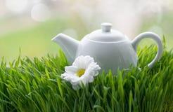 Chá natural na grama verde Fotos de Stock Royalty Free
