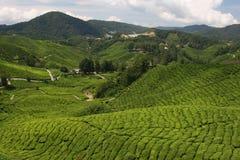 Chá no vale Imagens de Stock Royalty Free