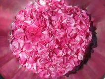 Chá Rosa Foto de Stock Royalty Free