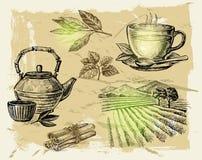 Chá tirado mão Fotos de Stock Royalty Free