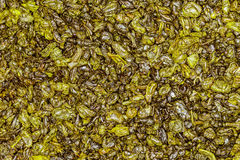 Chá verde da pólvora Fotos de Stock