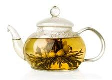 Chá verde de florescência no bule de vidro Imagem de Stock