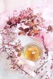Chá verde e refeição matinal cor-de-rosa da flor Imagens de Stock Royalty Free