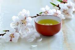 Chá verde em um copo tradicional imagens de stock royalty free