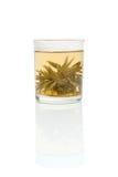 Chá verde escolhido imagens de stock royalty free