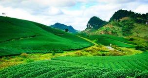 Chá verde fresco da beleza Imagens de Stock