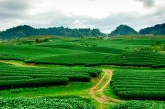 Chá verde fresco da beleza Fotos de Stock Royalty Free