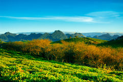 Chá verde fresco da beleza Imagens de Stock Royalty Free