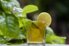 Chá verde saudável imagem de stock