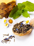 Chá verde seco Foto de Stock Royalty Free