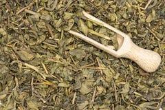 Chá verde seco isolado imagens de stock