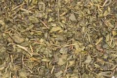 Chá verde seco isolado imagem de stock